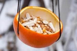 Кормушка для птиц из фруктов (апельсин)