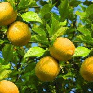 Как сделать лимонад в домашних условиях из лимона, воды и сахара: 5 рецептов